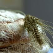 Nondisolopane - La farina di grano del miracolo: il pane