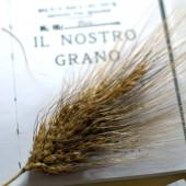 Nondisolopane - Che ne sai tu di un campo di grano?